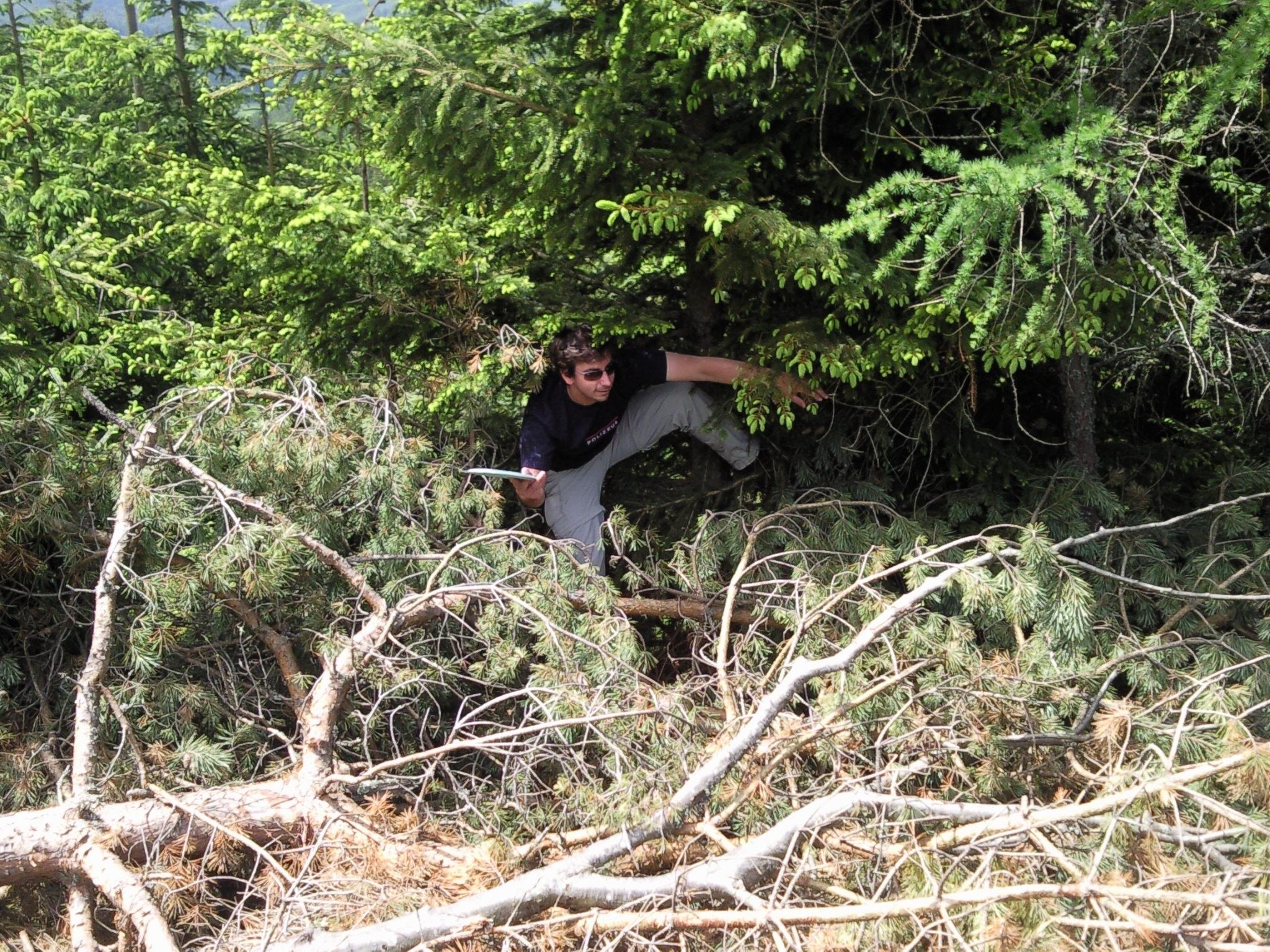 und schon wieder ist da etwas im Busch
